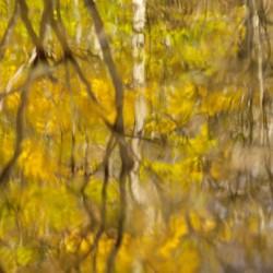 Autumnal swirls reflections