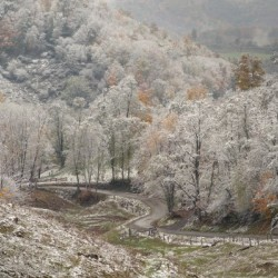 Back Hollow Road Tucker County WV autumn snow