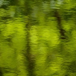 Flowing reflections spring