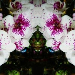 flower63
