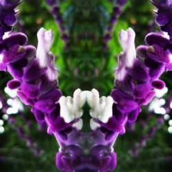 flower89
