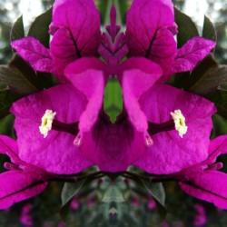 flower90