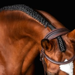 Horse Braid Portrait