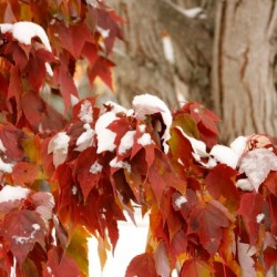Fall Colors with Snow