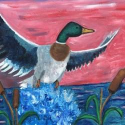 Mallard Duck Taking Flight