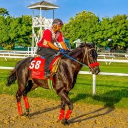 Racehorse01