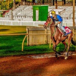 Racehorse02