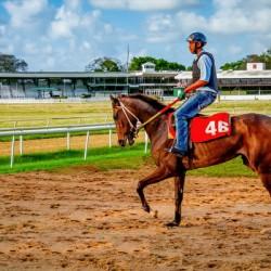 Racehorse04
