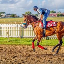Racehorse06