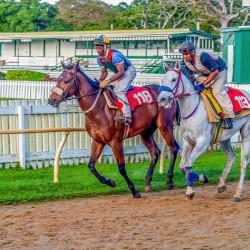 Racehorse07