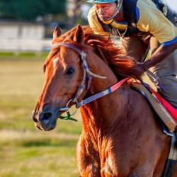 Racehorse11