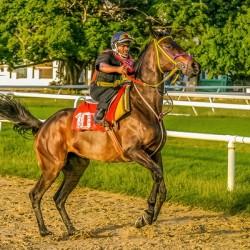 Racehorse12