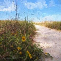 A Trail to the Beach