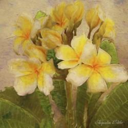 Floridian Bouquet