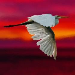 Egret in sunset