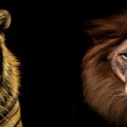 The Kings of Beasts - No Title
