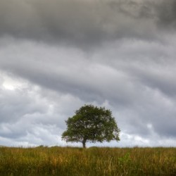 A tree and an approaching storm