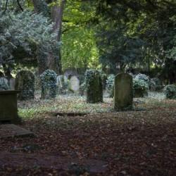 Ivy covered gravestones