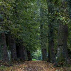 Tree lined path in Autumn