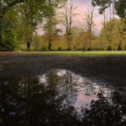 Autumn reflections in a field