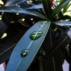 Raindrop on a green leaf