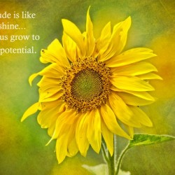 Gratitude is Like Sunshine