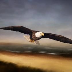 Raptor Skies