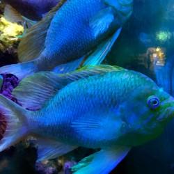 Blue Fish Aesthetic