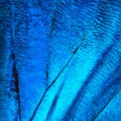 butterfly wing artdeco macro
