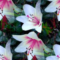 white lilies displate a
