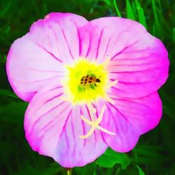 lady bug flower
