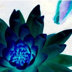 Cool Lotus