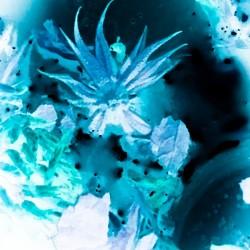 Bleu Bird Ingnite