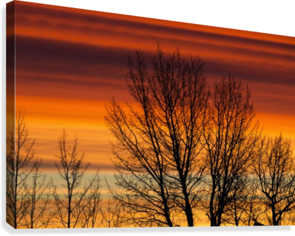 Silhouetted tree branches with dramatically colourful clouds at sunrise; Calgary, Alberta, Canada  Canvas Print