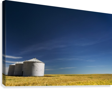 Large metal grain bins in a barley field with blue sky and wispy clouds; Acme, Alberta, Canada  Canvas Print