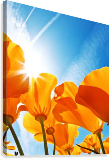 Field of Flowers with Blue Sky, Macro View  Canvas Print