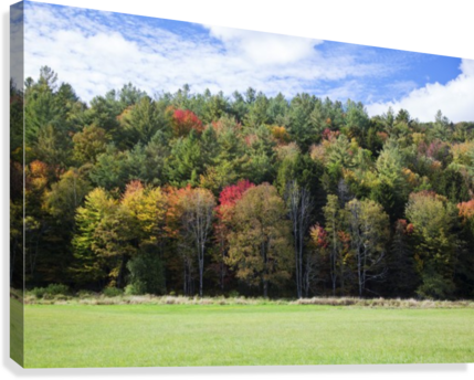 Colourful trees in autumn; Woodstock, Vermont, United States of America  Canvas Print
