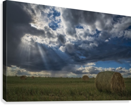 Sunlight breaks through the storm clouds over a field of hay bales; Saskatchewan, Canada  Canvas Print