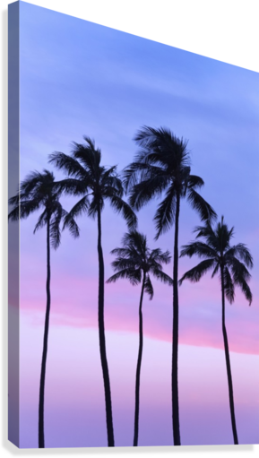 Five coconut palm trees in line with cotton candy sunset behind; Honolulu, Oahu, Hawaii, United States of America  Canvas Print