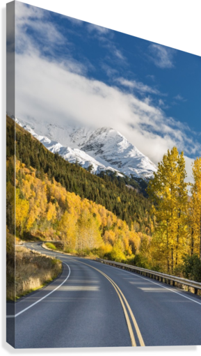 Snow-capped Kenai Mountains dwarf the Seward highway, trees covered in yellow leaves in autumn line the road, South-central Alaska; Seward, Alaska, United States of America  Canvas Print