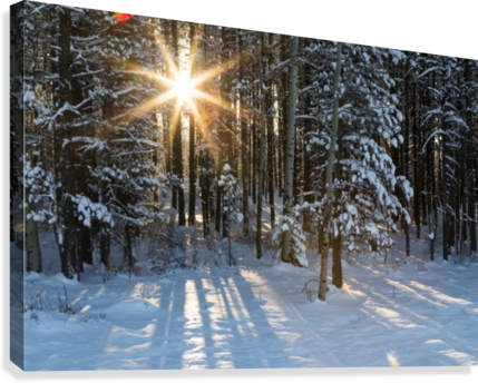 Sunburst coming through a snow covered forest; Kananaskis Country, Alberta, Canada  Canvas Print