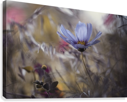 Things that flowers tell  Canvas Print