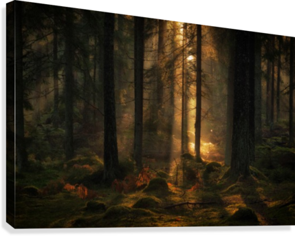 The light in the forest  Canvas Print