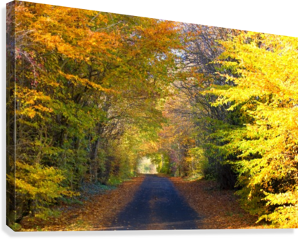 Rural Road, Argyll And Bute, Scotland  Canvas Print
