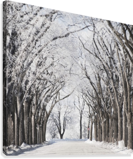 Winnipeg, Manitoba, Canada; A Road And Trees Covered In Snow In Winter  Canvas Print