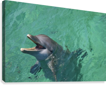 Roatan, Bay Islands, Honduras; Bottlenose Dolphin (Tursiops Truncatus) At Anthony's Key Resort  Canvas Print