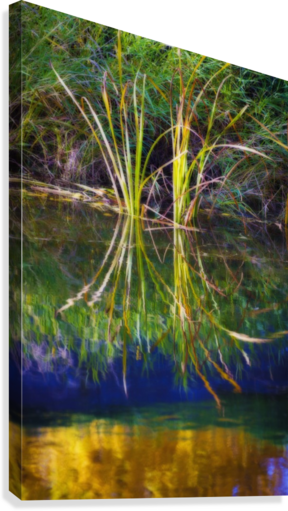 Reeds Reflecting On The Water; St. Albert, Alberta, Canada  Canvas Print