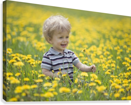 18-Month-Old Boy In Dandelion Field; Thunder Bay, Ontario, Canada  Canvas Print