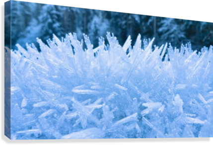 Close Up Of Hoar Frost Along The North Fork Of The Nooksak River During Winter, Mount Baker National Forest, Washington, Usa  Canvas Print