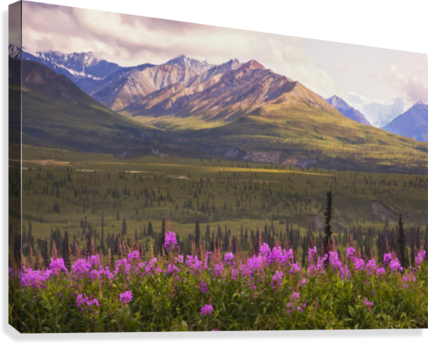 View Of The Chugach Mountains With Fireweed In The Foreground Along The Glenn Highway, Southcentral Alaska, Summer, Hdr  Canvas Print